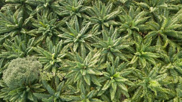 Luftbild der draufsicht von den drohnen der palme. schöne grüne umgebung.