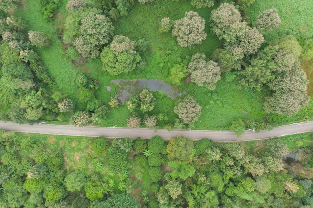 Luftbild der straße vorbei am wald
