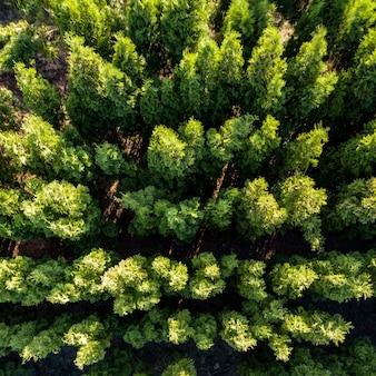 Luftbild des frühlingslaubwaldes. wald als integrale natürliche umgebung.