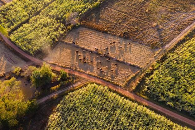 Luftbild-drohnenfarm und landschaft im sonnenlicht