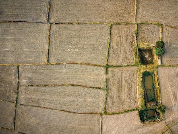 Luftbild eines großen landwirtschaftlichen grundstücks vorbereitung des reisanbaus, drohnenfotografie