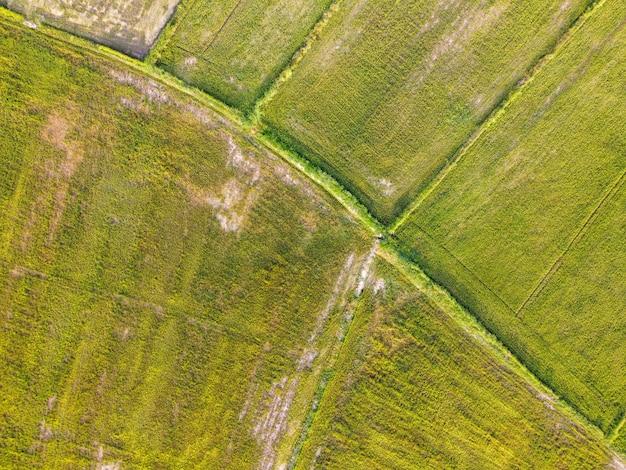 Luftbild, grüne reisfelder in ländlichen gebieten, thailand