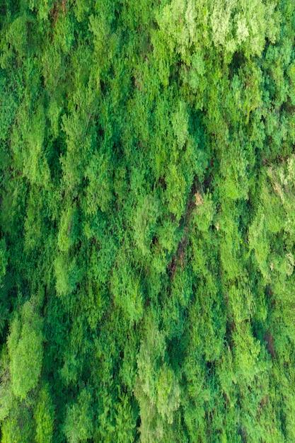 Luftbild grüner wald