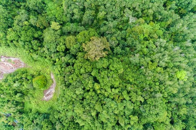 Luftbild top down von tropischen regenwald wunderschöne natur waldlandschaft landschaft