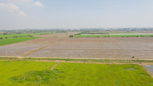 Luftbild von fliegenden drohne feld reis mit landschaft grün muster natur szene draufsicht feld reis