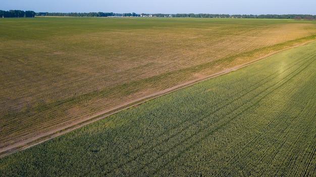 Luftbild von kulturpflanzen