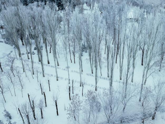 Luftbild von oben auf den verschneiten winterwald
