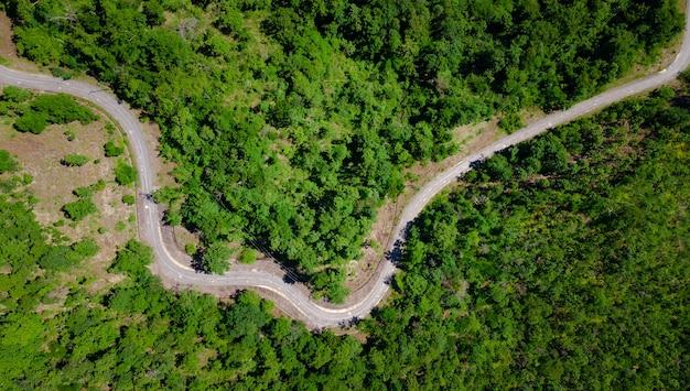 Luftbild von oben auf die kurvenfahrbahn durchqueren frischen grünen wald auf dem berg, straßenweg auf dem hügel