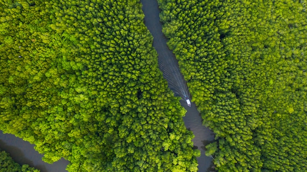 Luftdraufsicht des bootes auf dem fluss in mangroven forest conservation in thailand