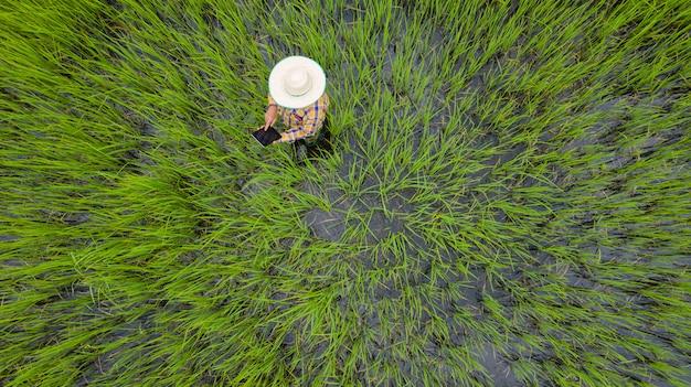 Luftdraufsicht des landwirts, der digitales tablet auf einem grünen reisgebiet verwendet