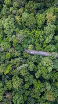 Luftdraufsichtautofahren durch den wald auf landstraße, ansicht vom brummen