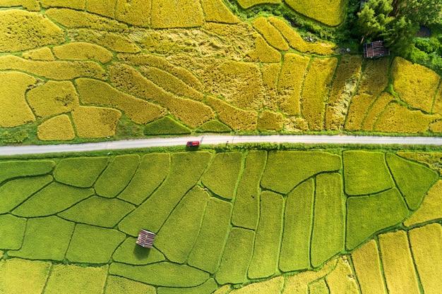 Luftdrohnen-fotografie übersteigen unten von den grünen und goldenen reisfeldern mit schönem licht der natur morgens
