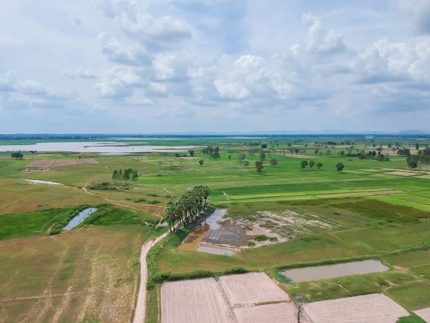 Luftdrohnen-gesamtlänge-ansicht: fliegen vom landschaftsreisfeld in thailand.