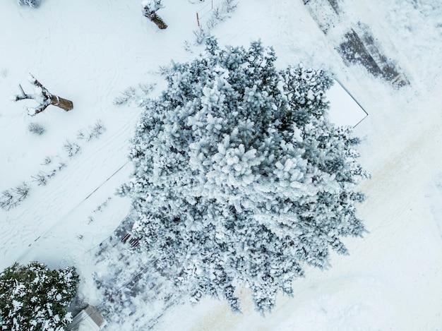 Luftdrohnenansicht des kiefern- und blattwaldes, der an kühlen wintertagen mit schnee bedeckt ist