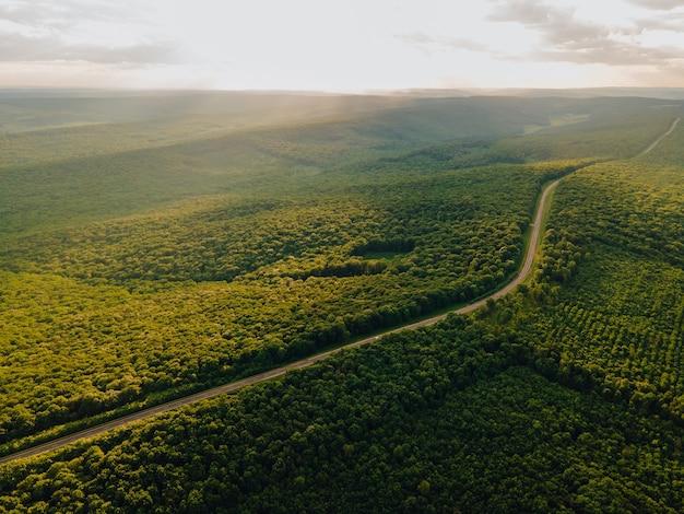 Luftflug über die straße zwischen wald bei sonnenaufgang grüne farben antenne grüner landschaft und auto fahren durch leere straße endlose asphalt gerade autobahn im grünen dichten wald