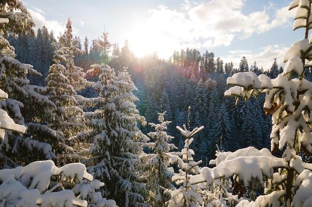 Luftwinterlandschaft mit spruse-bäumen aus schneebedecktem wald in kalten bergen am abend.