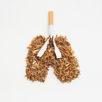 Lungen aus tabak und zigarette auf weißem hintergrund