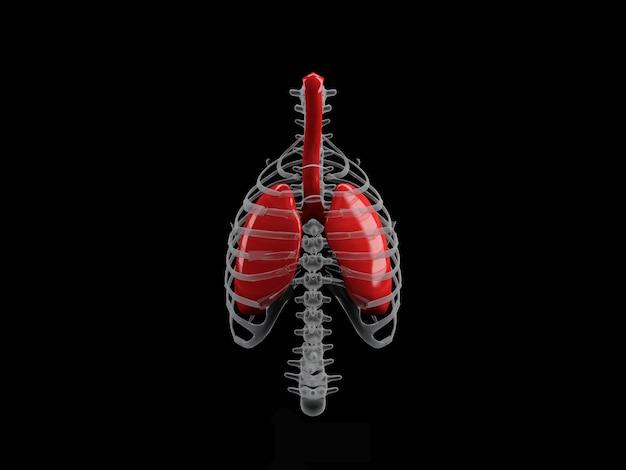 Lungen der menschlichen organe im schwarzen hintergrund