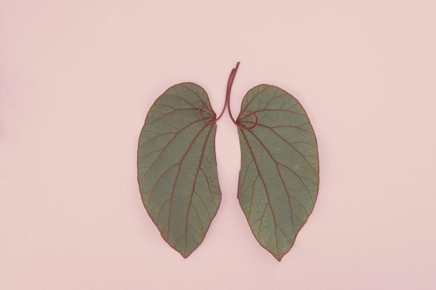 Lungenförmige blätter