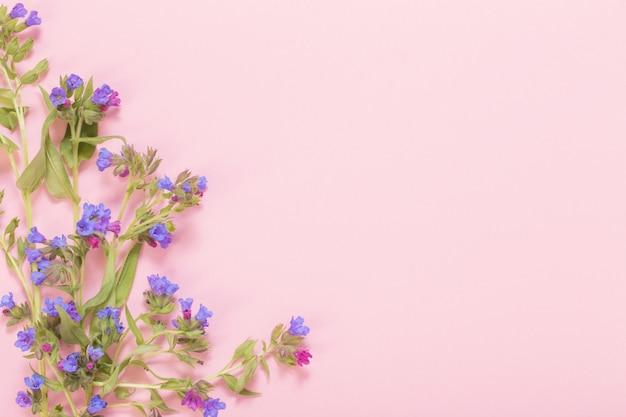 Lungenkraut blüht auf rosa papieroberfläche