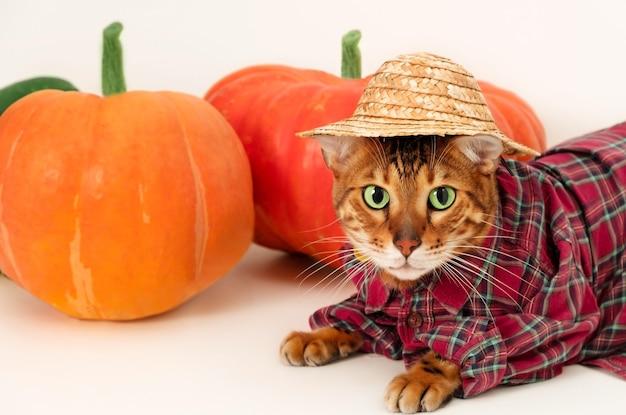Lustige bengalkatze trägt bauernkostüm in der nähe von kürbis haustier und halloween oder erntekonzept