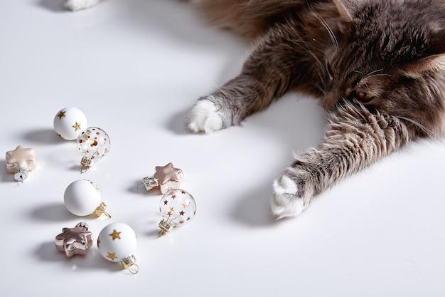 Lustige graue katze spielt mit weihnachtsspielzeug weihnachtszeit und neujahr