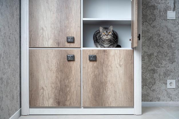 Lustige haustiere. katze sitzt im schrank. katzen lieben es, sich an abgelegenen orten zu verstecken. finden sie ein katzenkonzept.