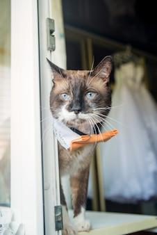 Lustige katze der netten hochzeit nahe dem fenster