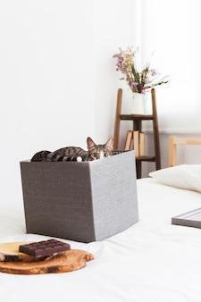 Lustige katze, die innerhalb des kastens sich versteckt
