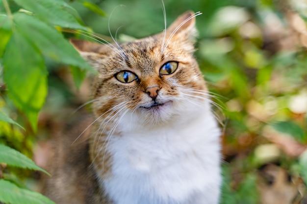 Lustige katze in der hellen farbe untersucht direkt die kamera im park im sommer