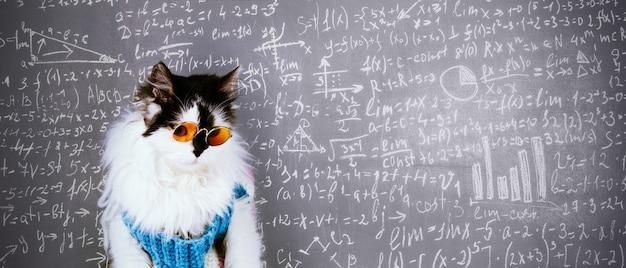 Lustige katze in gestricktem winterpullover und brille über tafel mit wissenschaftlichen formeln beschriftet