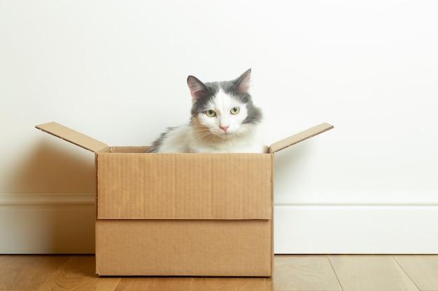 Lustige katze sitzt in einem pappkarton gegen eine weiße leere wand