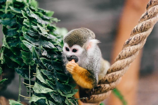 Lustige kleine affen-unterart im zoo