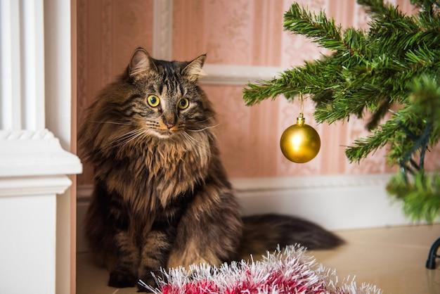Lustige norwegische katze unter weihnachtsbaum am neuen jahr.