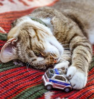 Lustige schlafende tabbykatze liegt mit autospielzeug