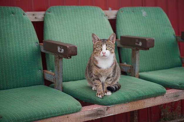 Lustige straßenkatze auf alten kinositzen. zufällige treffen in den straßen der stadt
