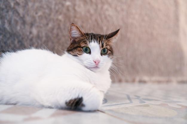 Lustige überraschte katze mit grünen augen