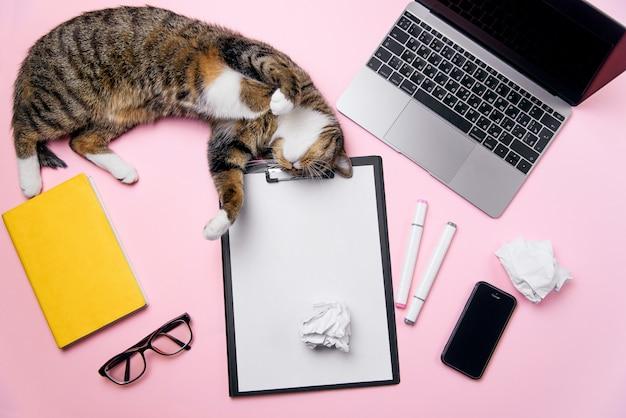Lustige verspielte katze, die auf dem büroschreibtischhintergrund der frau liegt