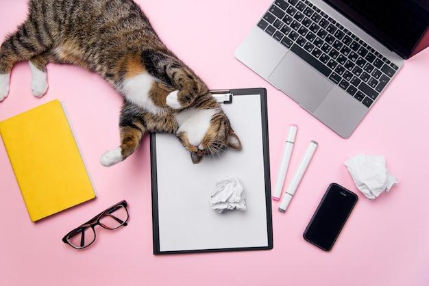 Lustige verspielte katze, die auf dem schreibtisch der frau liegt.