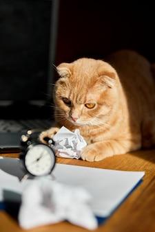 Lustige verspielte katze, die im sonnenlicht auf dem schreibtisch liegt, heimarbeitsplatz