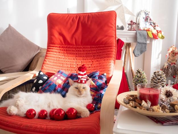 Lustige weiße flauschige katze in der weihnachtsmannmütze, die auf dem schaukelstuhl mit weihnachtskugeln liegt