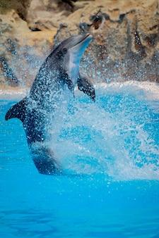 Lustiger delphin, der während einer show an einem zoo springt