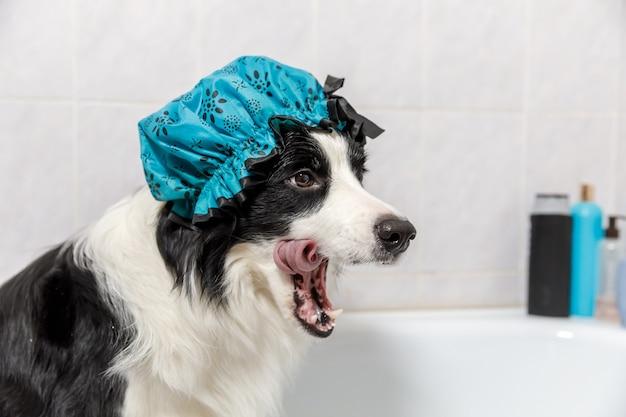 Lustiger hündchen-grenzcollie, der im bad sitzt, erhält schaumbad, das duschhaube trägt