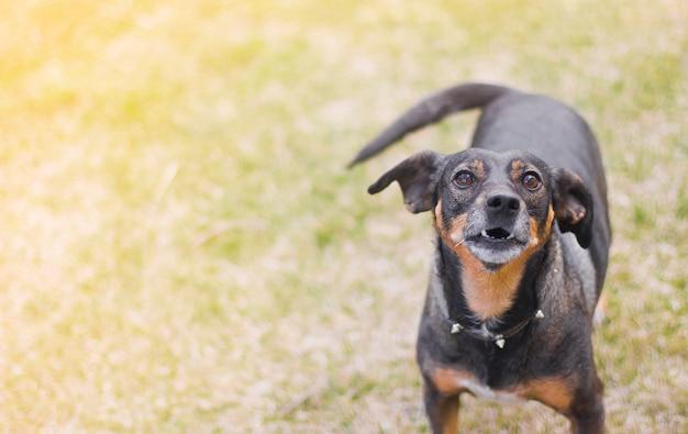 Lustiger hund auf einem hintergrund des grases.