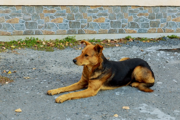 Lustiger hund, der auf beton die straße sitzt