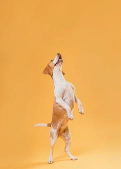 Lustiger hund, der auf hinterbeinen steht