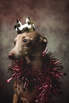 Lustiger hund gekleidet als zaubererkönig. weihnachten