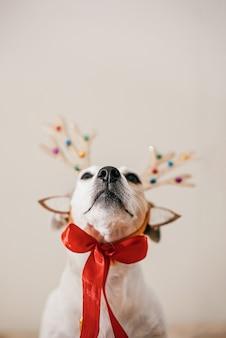 Lustiger hund in einem hirschkostüm mit geweih, vorbereitung für die party und maskerade. festliches konzept der frohen weihnachten