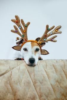 Lustiger hund jack russell in einem hirschkostüm mit glänzendem geweih, das sich auf den urlaub vorbereitet