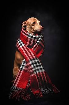 Lustiger hund mit rotem plaidschal